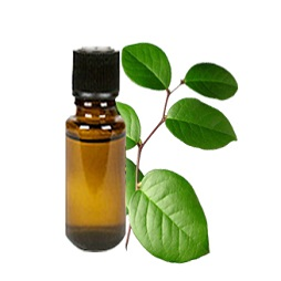 Gaultheria oil buy online